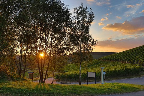 Wiltingen Klosterberg Sundown