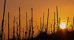 Wiltinger Galgenberg Sundown