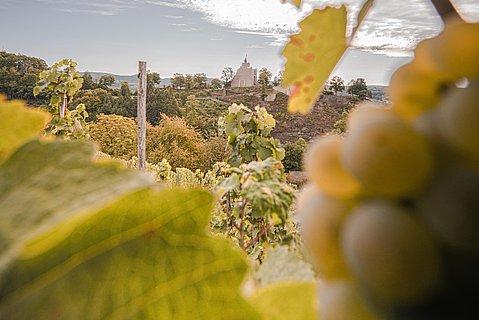 Blick auf die Saarburg zwischen Weinreben hindurch