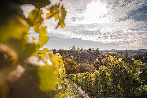 Blick von den Weinbergen auf die Saarburg