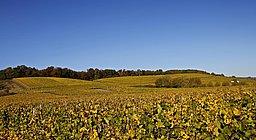 Blick über die herbstlich gefärbten Weinstöcke im Konzer Tälchen