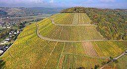 Blick auf die Ayler Kupp, berühmte Weinlage nahe Saarburg