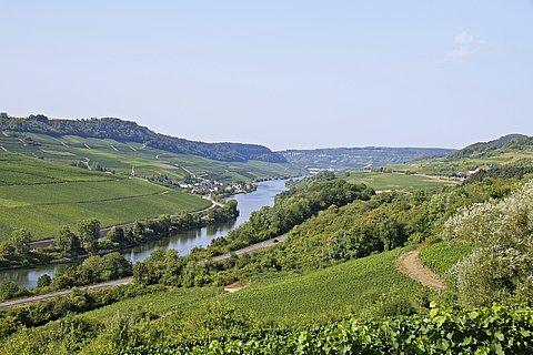 Blick auf die Weinlandschaft an der Obermosel bei Nittel