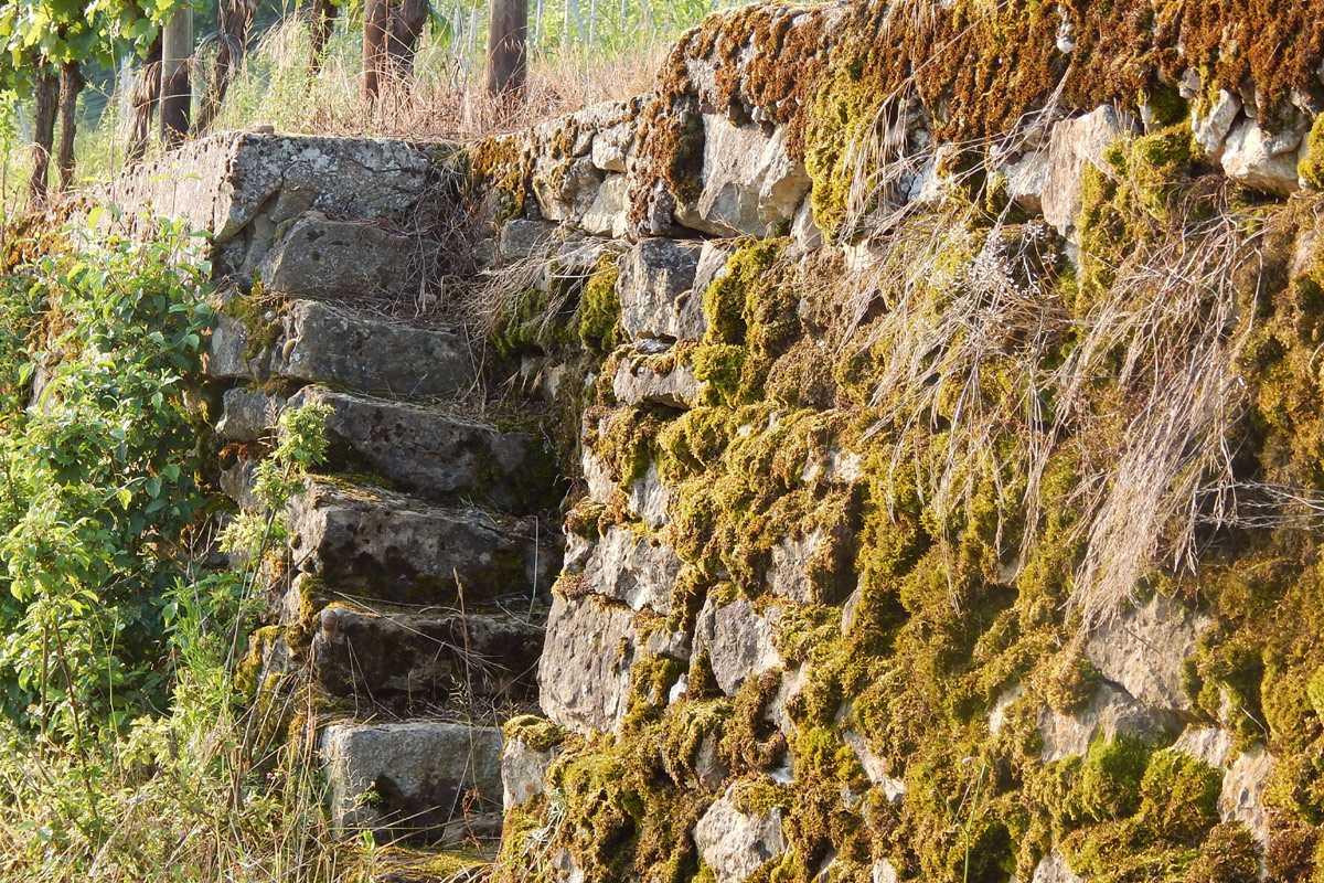 Bewachsene Steintreppe in den Weinbergen