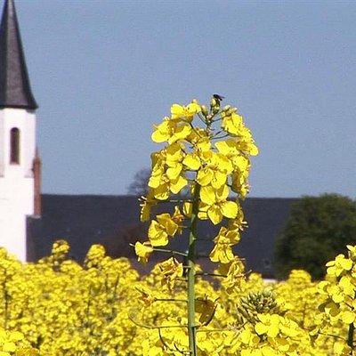Foto: Merzkirchen (3)