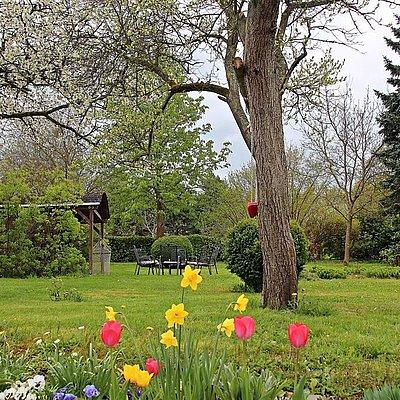Foto: Garten im Frühling