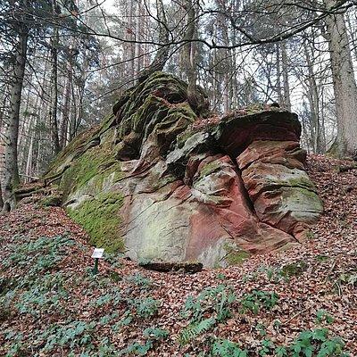Foto: Walderlebnispfad (2)