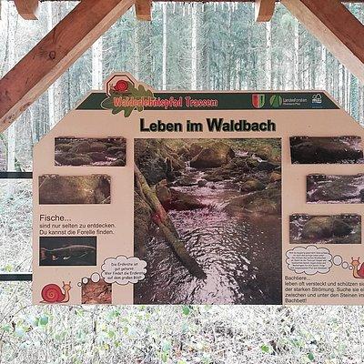 Foto: Informationspavillon Wald und Wasser (2)