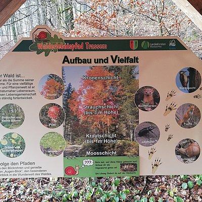 Foto: Informationspavillon Lebensraum Wald (3)