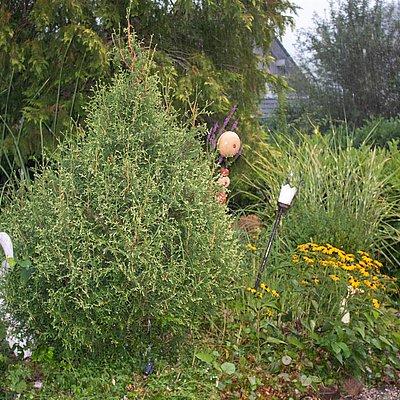 Foto: Hausgarten mit Teich