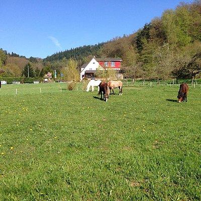 Foto: Camping Waldfrieden (10)