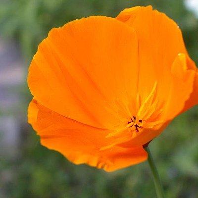 Foto: Blütenzauber