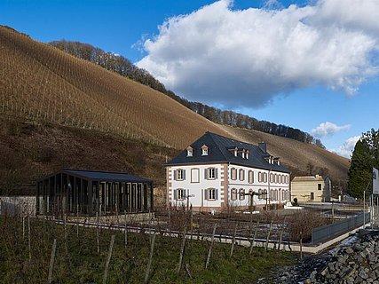 Weingut Cantzheim Kanzem (1)