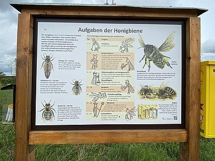 Wildbienenwiese (01)