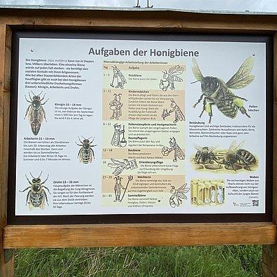 Foto: Wildbienenwiese (01)