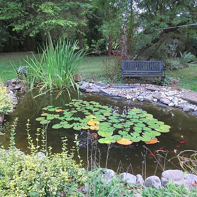 Foto: Teich im Park