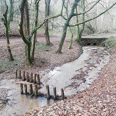 Foto: Informationspavillon Wald und Wasser (1)