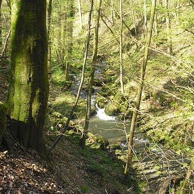 Foto: Leukbachtal (03)