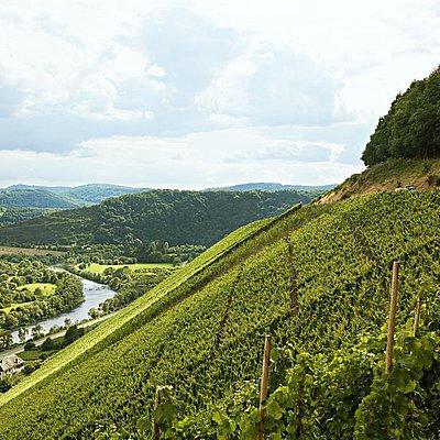Foto: Weingut Von Othegraven (3)