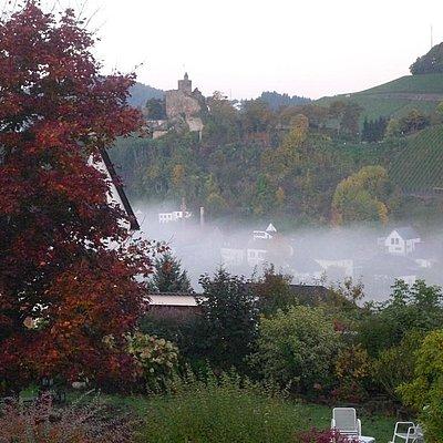 Foto: Garten mit Herbstnebel