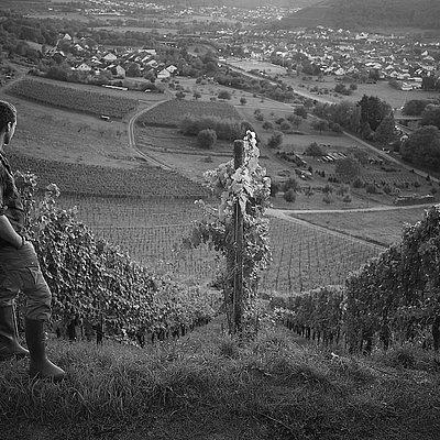 Foto: Weinhof Herrenberg Schoden (4)