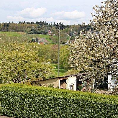 Foto: Blick aus Weinlaube