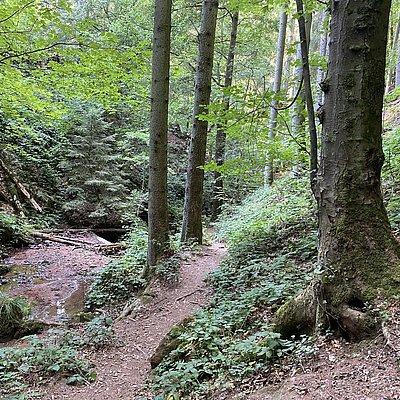 Foto: Ewigbachtal (05)