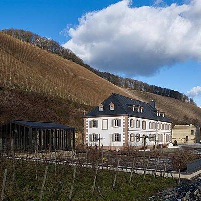 Foto: Weingut Cantzheim Kanzem (1)