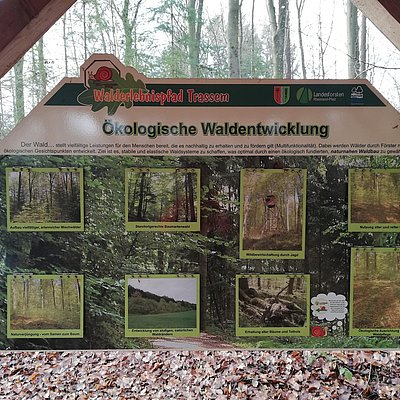 Foto: Informationspavillon Naturnahe Waldwirtschaft (2)