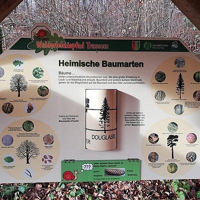 Foto: Informationspavillon Lebensraum Wald (2)
