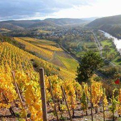Foto: Ausblick über die Weinberge