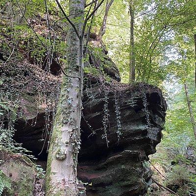 Foto: Ewigbachtal (03)