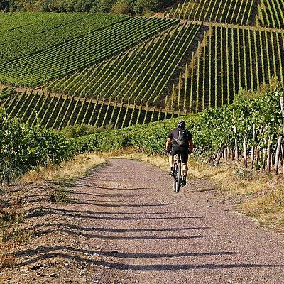 Foto: Wein-Biker-Tour (1)