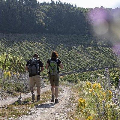 Foto: Weinwanderung