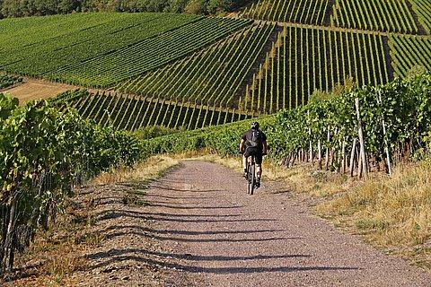 Wein-Biker-Tour