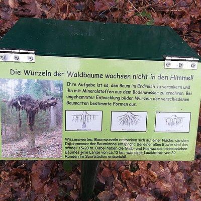 Foto: Wald und Boden (2)